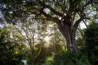 Bosque en Kenia