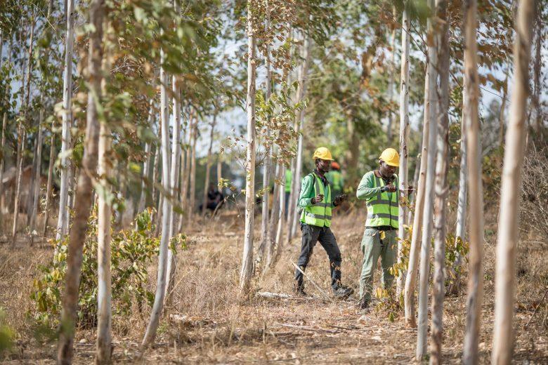 Hombres trabajando en un bosque en Kenia